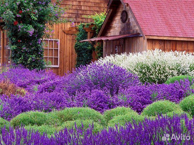 Многолетние садовые цветы кустарники