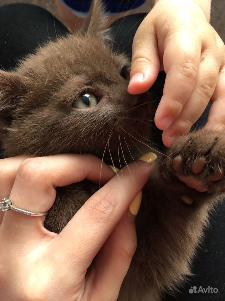 Отдам котёнка бесплатно в Тюмени - фотография № 3