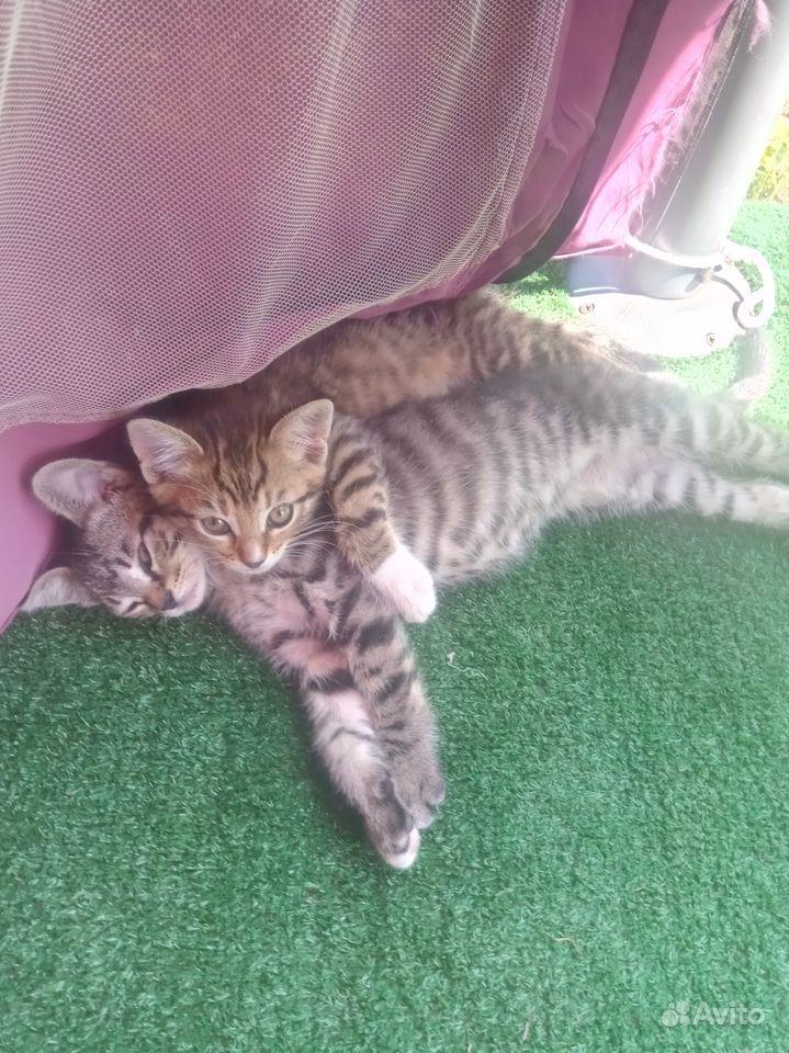 Отдаю котят в дар в Чехове - фотография № 6