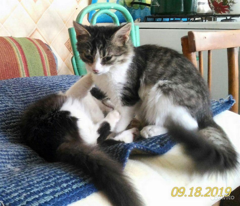 Котята, в добрые руки - фотография № 4