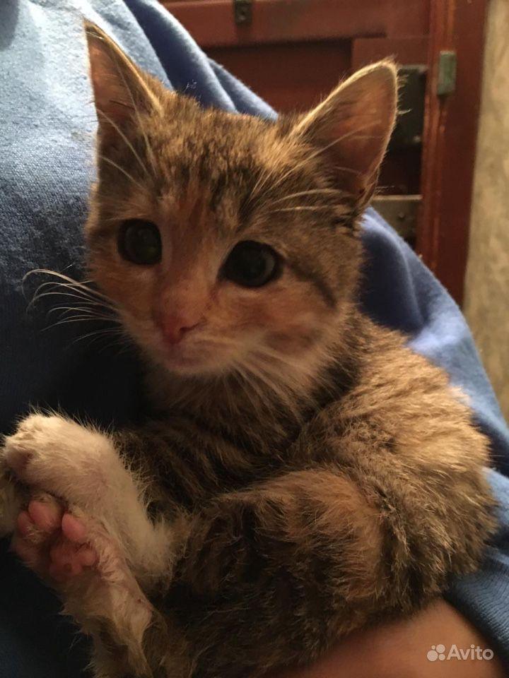 Котёнок-девочка в дар - фотография № 4