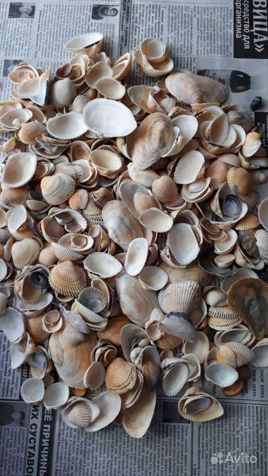 Морские ракушки купить на Зозу.ру - фотография № 1