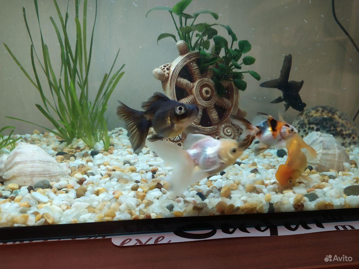 Рыбки купить на Зозу.ру - фотография № 6