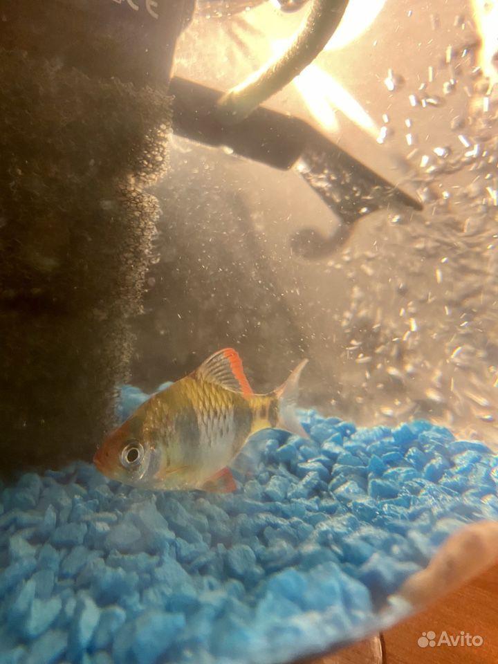 Аквариум с рыбками купить на Зозу.ру - фотография № 7