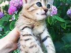 Котятя-красавцы
