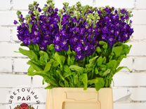 Трех кострома доставка цветов по россии оптовая роз штука