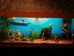 3 аквариума
