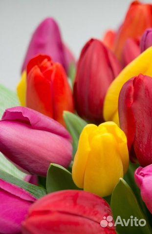 Авито тюльпаны луковицы оптом купить купить надувные цветы- дорожку