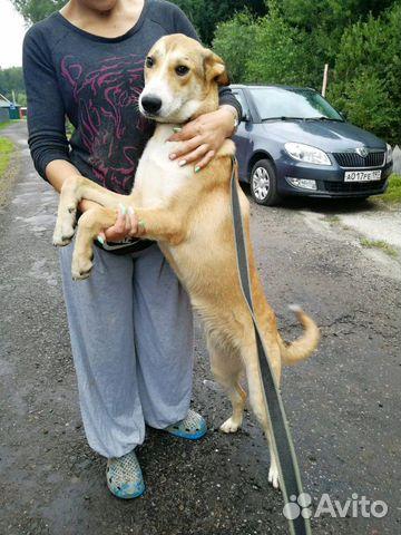 Бонита купить на Зозу.ру - фотография № 6