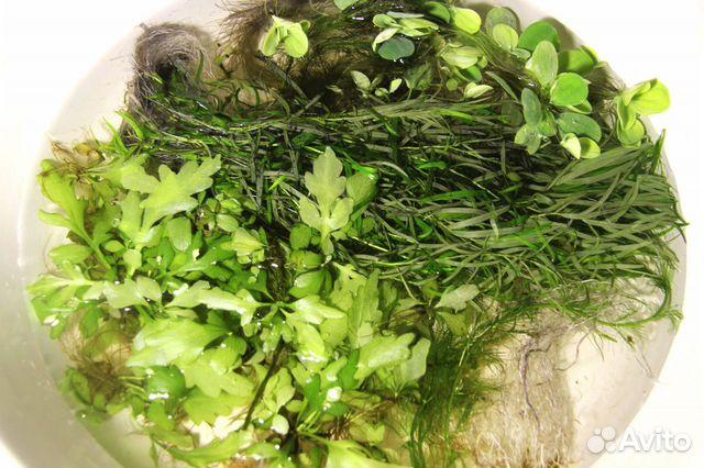 Растения для аквариума 89816807463 купить 4