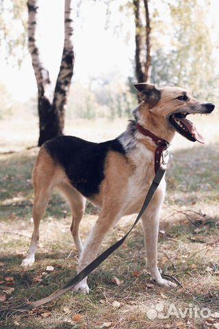 Молодая и добрая собака в дар купить на Зозу.ру - фотография № 3