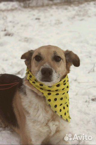 Собачка Мия в дар купить на Зозу.ру - фотография № 1