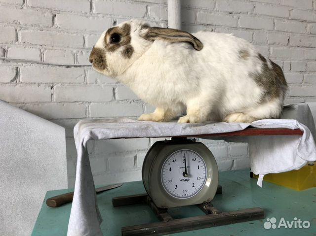 Кролики купить 4