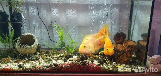 Рыбки аквариумные 89118444414 купить 1
