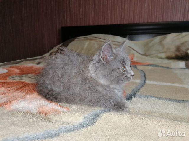 Отдам котенка девочка 89195613575 купить 1
