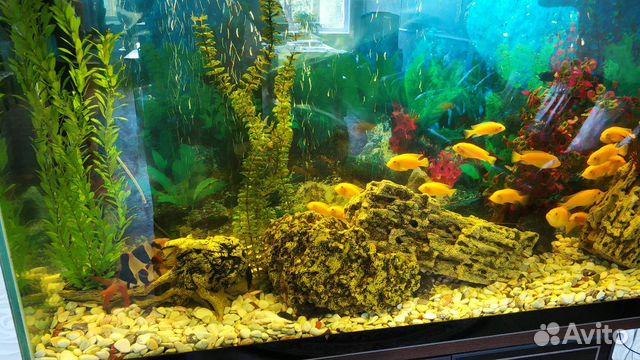 Аквариум с системой и рыбками  купить 7