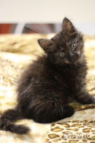Котенок 89065024858 купить 1