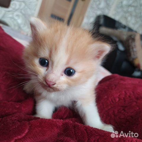 Котенок  89997818867 купить 3