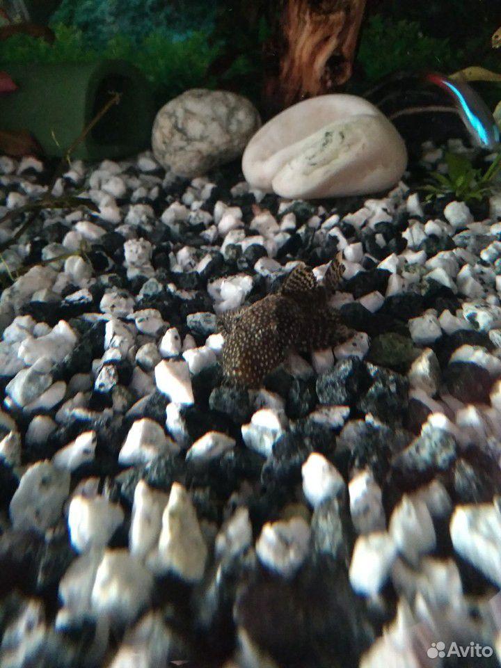 Аквариумное растение, рыбки,креветки