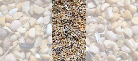 Зерносмесь купить в Саратовской области | Животные и зоотовары | Авито
