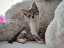 Милые котята (: