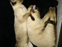 Кошка кот и котята