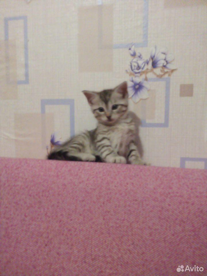 Отдам котят  89125546532 купить 5