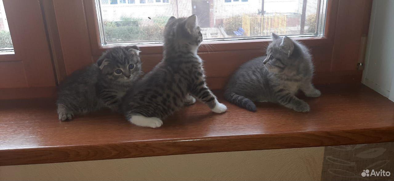 Кошка  89011912214 купить 3